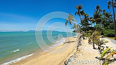 Tropical Beach Palm