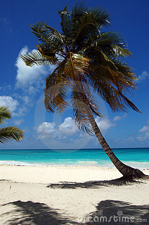 A tropical beach with a palm
