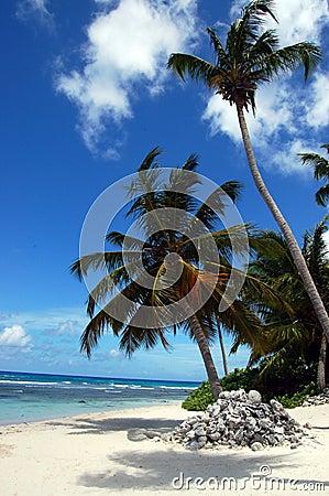 A tropical beach with a palm