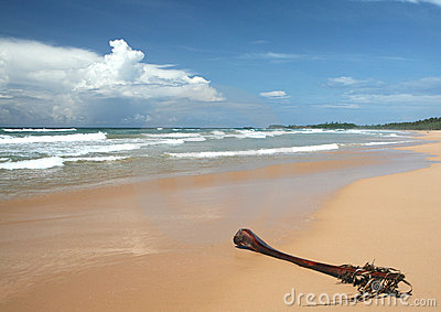 Tropical beach and palm frond