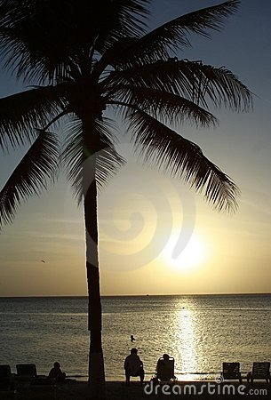 Tropical beach and palm tree