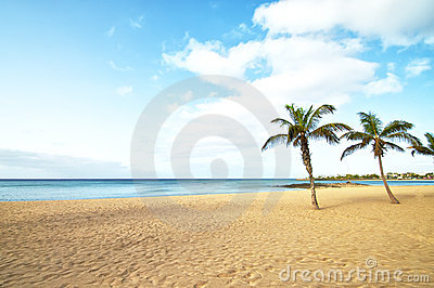 Tropical Beach Palm Tree