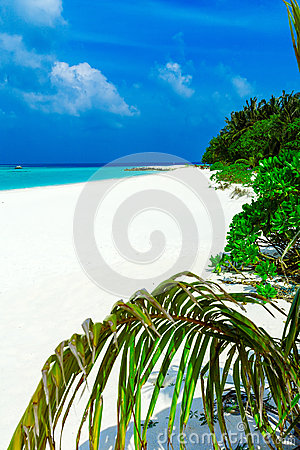 Tropical Beach with Palm Trees