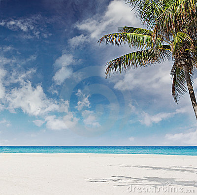 Tropical beach with  palm trees in Miami Florida