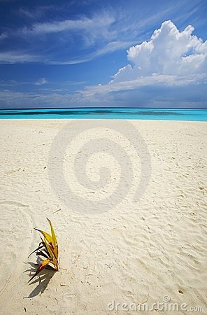 Tropical beach with a palmtree