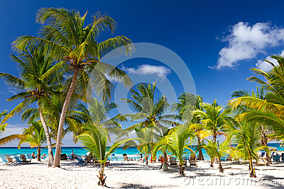 Tropical Beach, Saona Island,