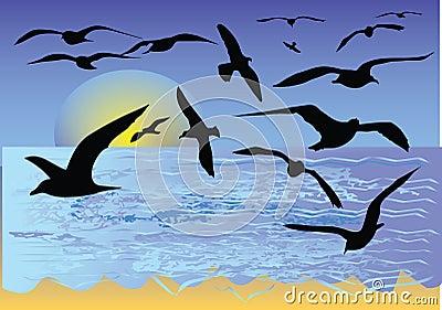 Tropical beach with seagull