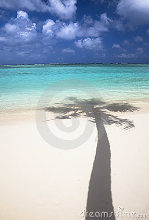 Tropical beach and shadow of coconut