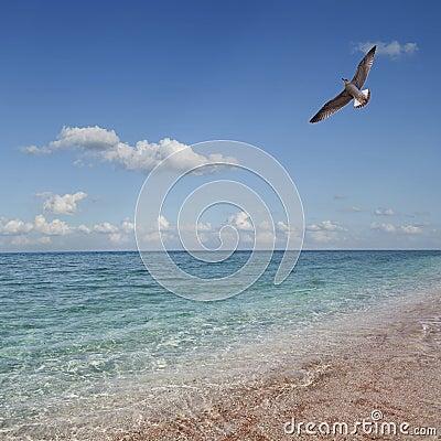 Tropical beach. Sky and sea.