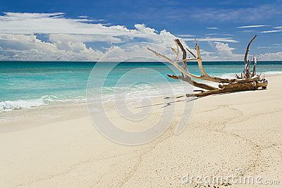Tropical beach at summer day, with large branch