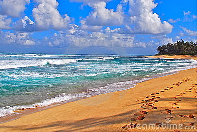 Tropical beach and surf
