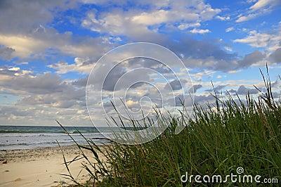 Tropical beach with vegetation