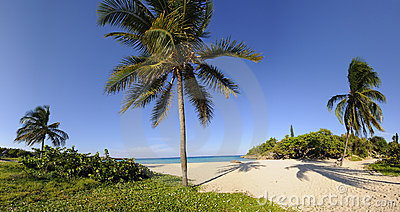 Tropical beach with vegetation panorama
