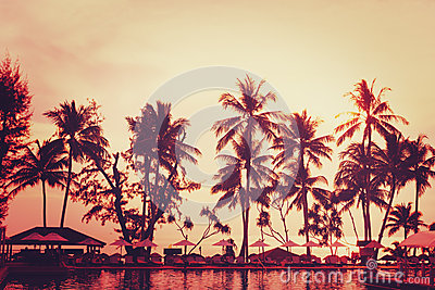 Tropical beach view. Palm tree and red sunset sky.