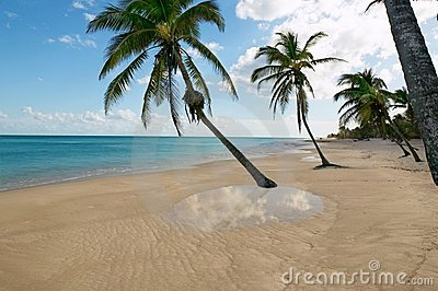 Tropical beach water reflection Caribbean