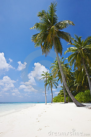 Free Tropical Beach With Palm Trees Stock Photography - 4838362