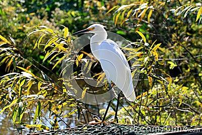 Tropical bird in a park