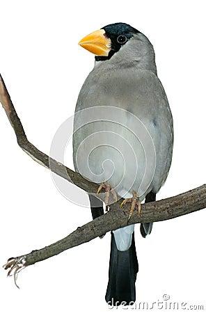 Tropical bird on a twig