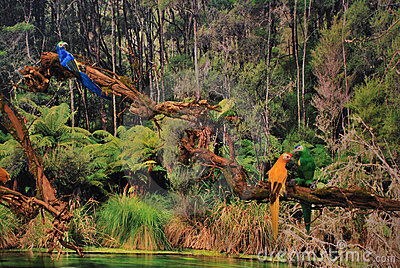 Scenic view of tropical jungle and lake with colorful birds perching ...