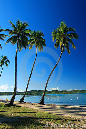 Free Tropical Blue Royalty Free Stock Images - 1760969