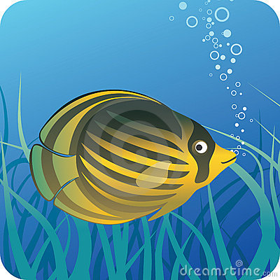 Tropical butterfly fish under water