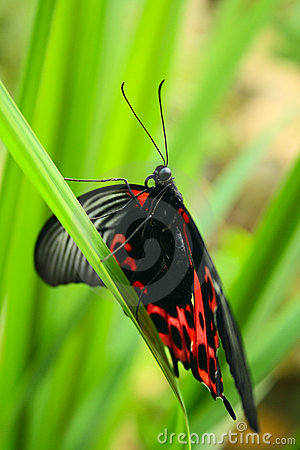 Tropical butterfly on grass