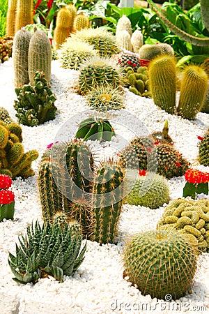 Free Tropical Cactus Zen Garden Royalty Free Stock Image - 19305946