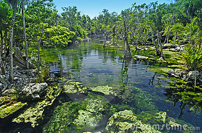 Tropical Cenote in Mexico