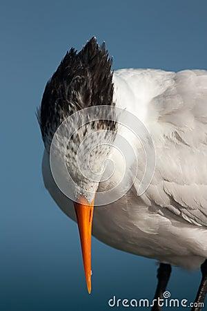Tropical coastal birds