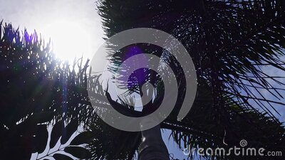Tropical palm trees against bright blue sky stock footage