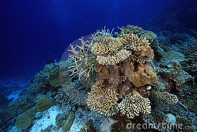 Tropical coral reef