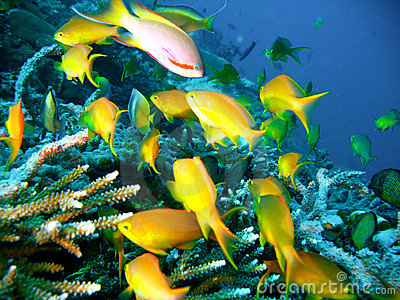 Tropical Coral Reef Fish Stock Photos Image 4489903