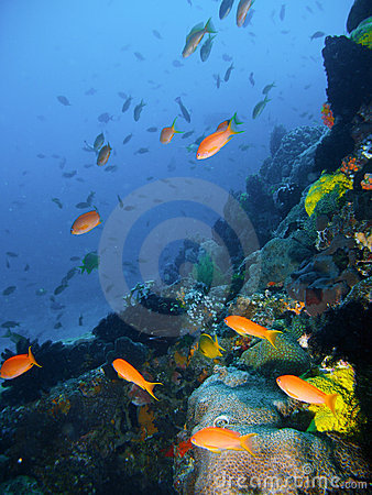 Free Tropical Coral Reef Fish Stock Image - 4494721