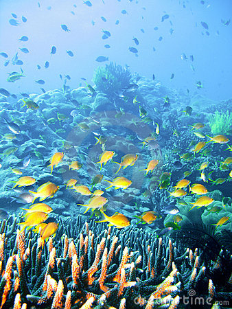 Free Tropical Coral Reef Fish Royalty Free Stock Photos - 4495068