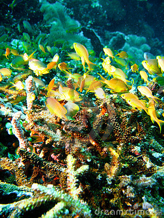 Free Tropical Coral Reef Fish Royalty Free Stock Photography - 4495697