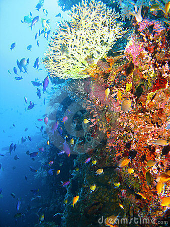 Free Tropical Coral Reef Fish Stock Images - 4496374