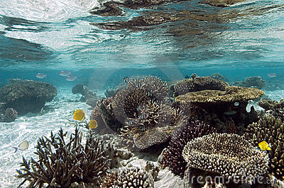 Tropical coral reef - The Maldives