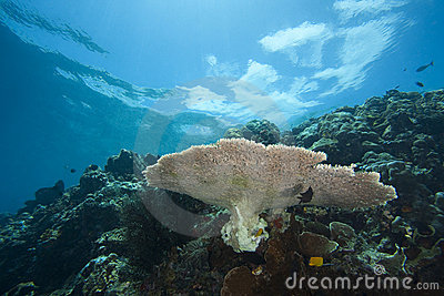 A tropical coral reef off Bunaken Island