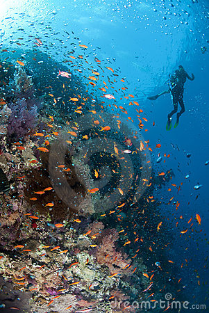 Tropical coral reef scene and scuba divers.