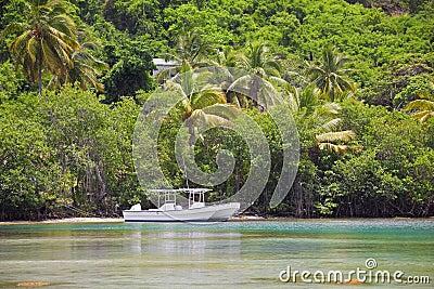 Tropical cove