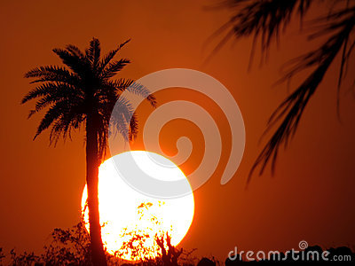 Tropical Desert Sunset