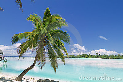 Tropical Dream Beach Paradise