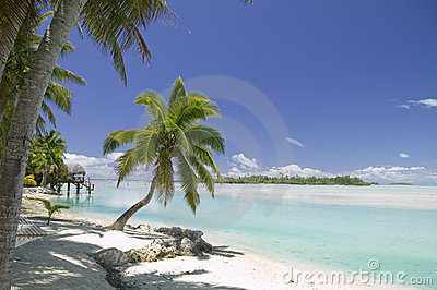 Tropical Dream Beach Paradise