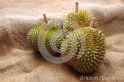 Tropical Durian fruit
