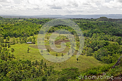 Tropical Farm Editorial Stock Photo