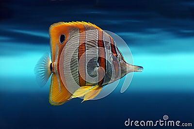 Tropical fish №14