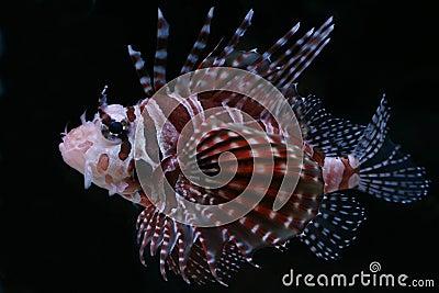 Tropical fish №21