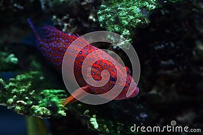 Tropical fish №22