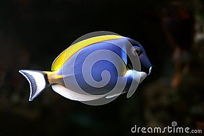 Tropical fish №27