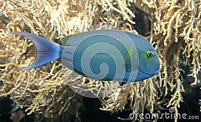 Tropical Fish 3